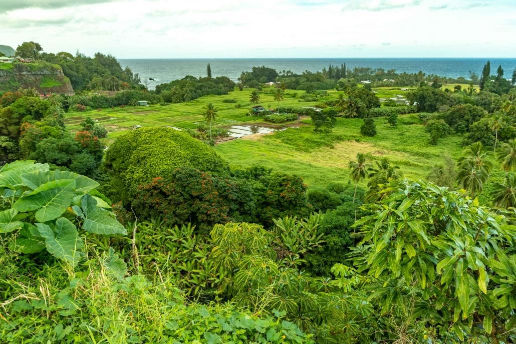 Keanae Peninsula Overlook Vegetation Road to Hana Maui