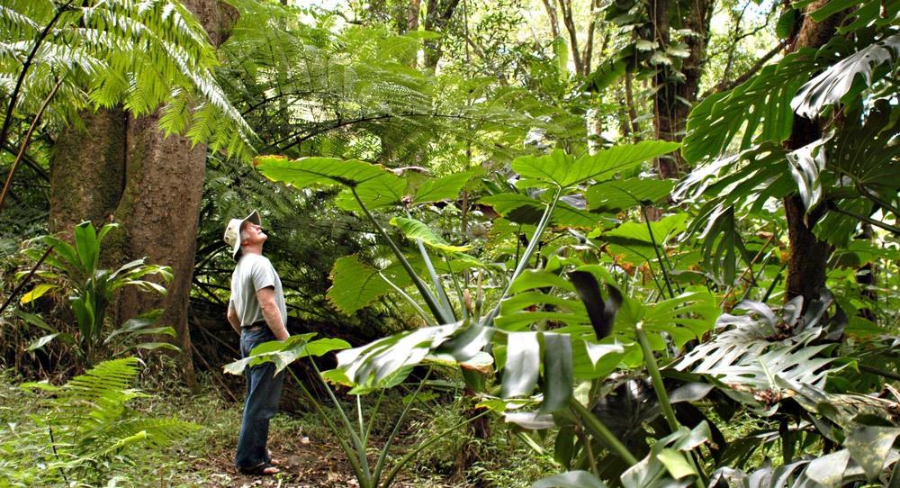 Ken Rainforest