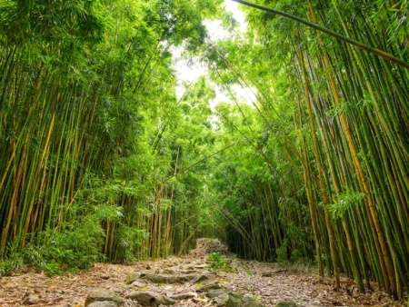 Pipiwai Trail Bamboo Pools of Oheo Road to Hana Maui