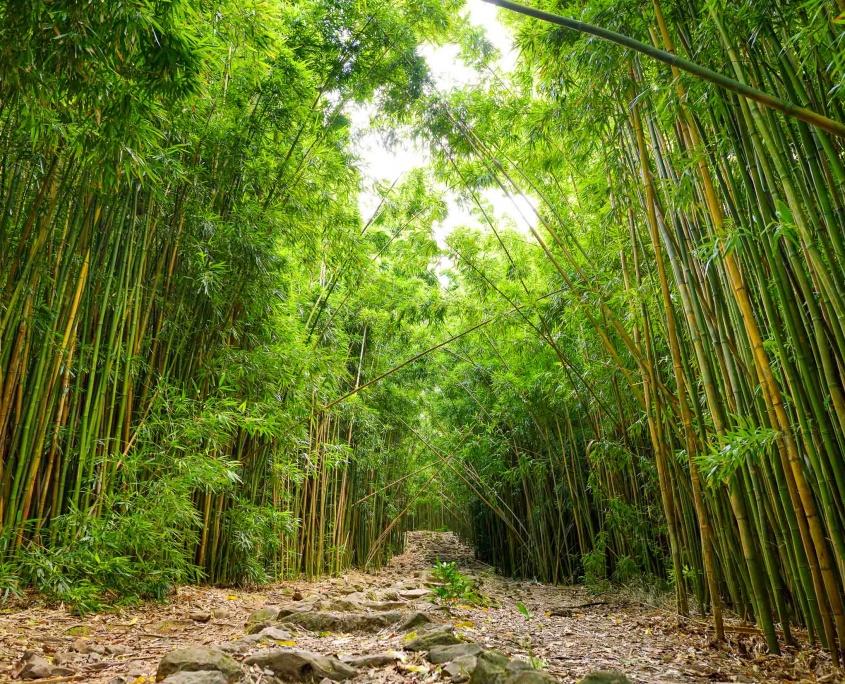 Pipiwai Trail Bamboo Pools of Oheo Road to Hana Maui