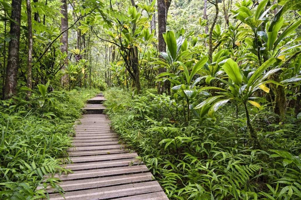 Pipiwai Trail Boardwalk to Waterfall Road to Hana Maui