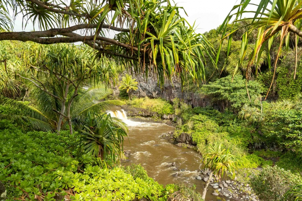 Pools of Oheo Gulch and Trees Kipahulu road to Hana Maui