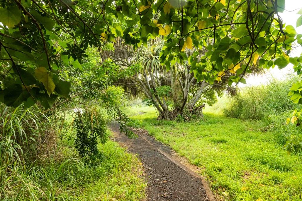 Pools of Oheo Path to Coastline Kipahulu road to Hana Maui