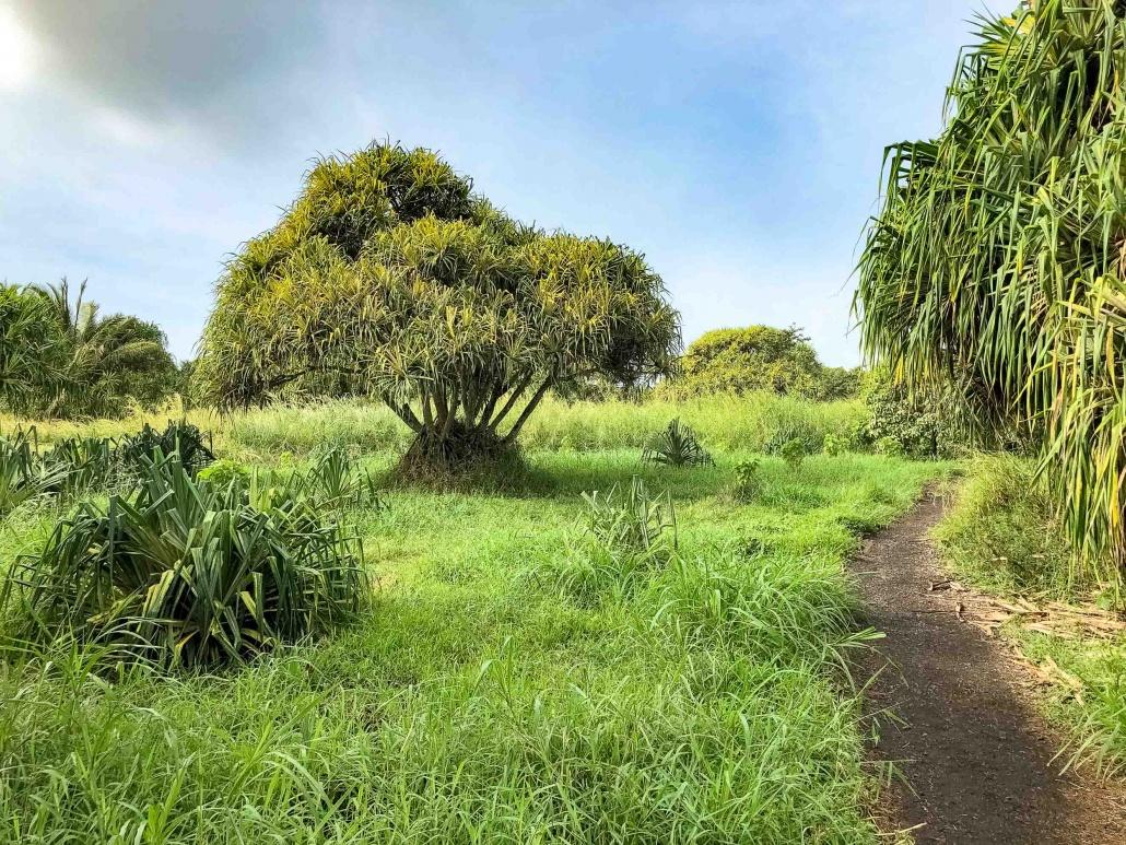 Pools of Oheo Trail and Hala Trees Kipahulu road to Hana Maui