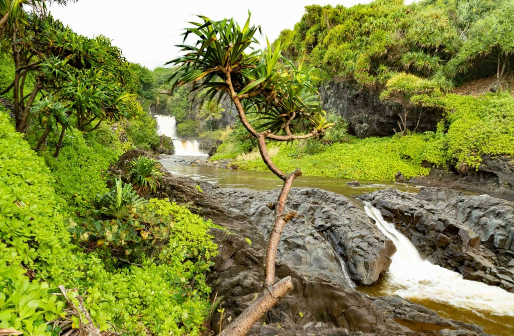 Pools of Oheo Waterfall Pools and Hala Tree Kipahulu road to Hana Maui