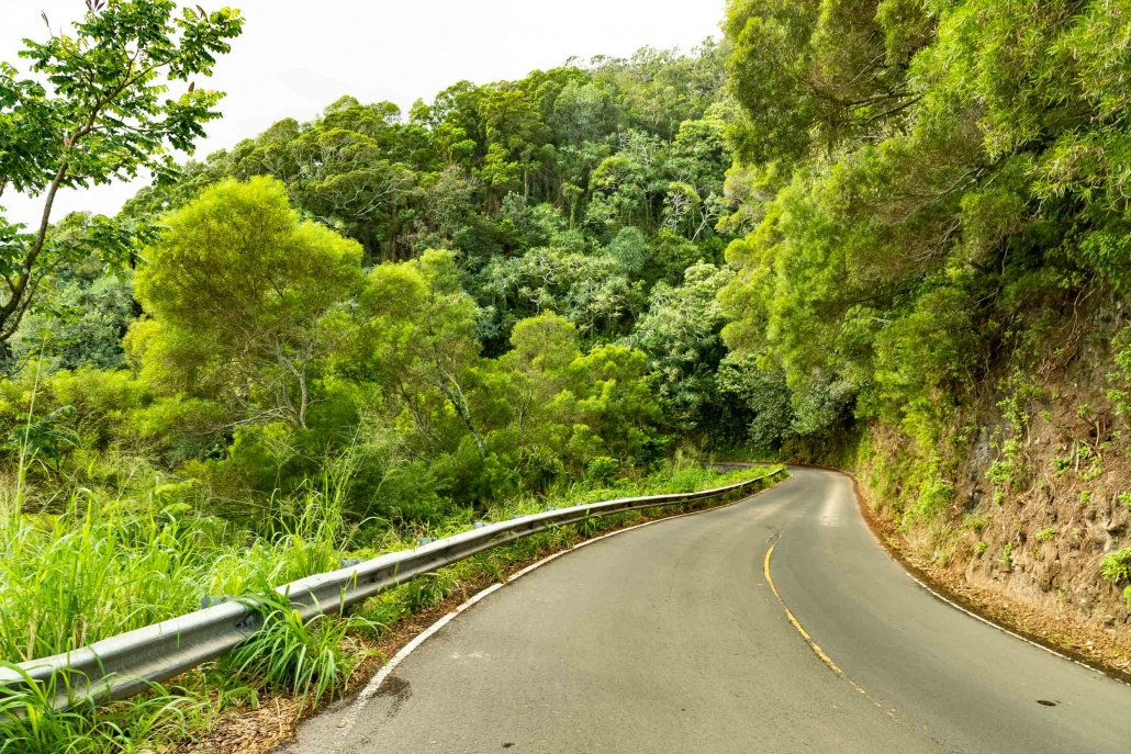 Road To Hana Narrow Road and Forest Maui