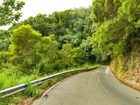 Road To Hana Narrow Road and Forest Maui