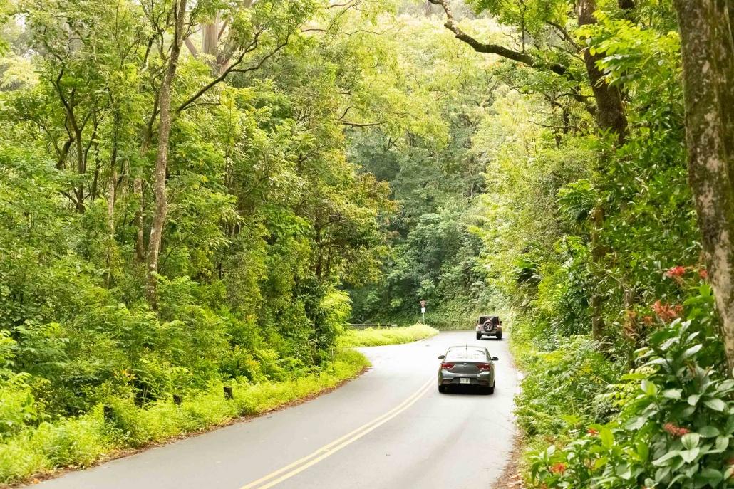 Road to Hana Cars and Rainforest Maui