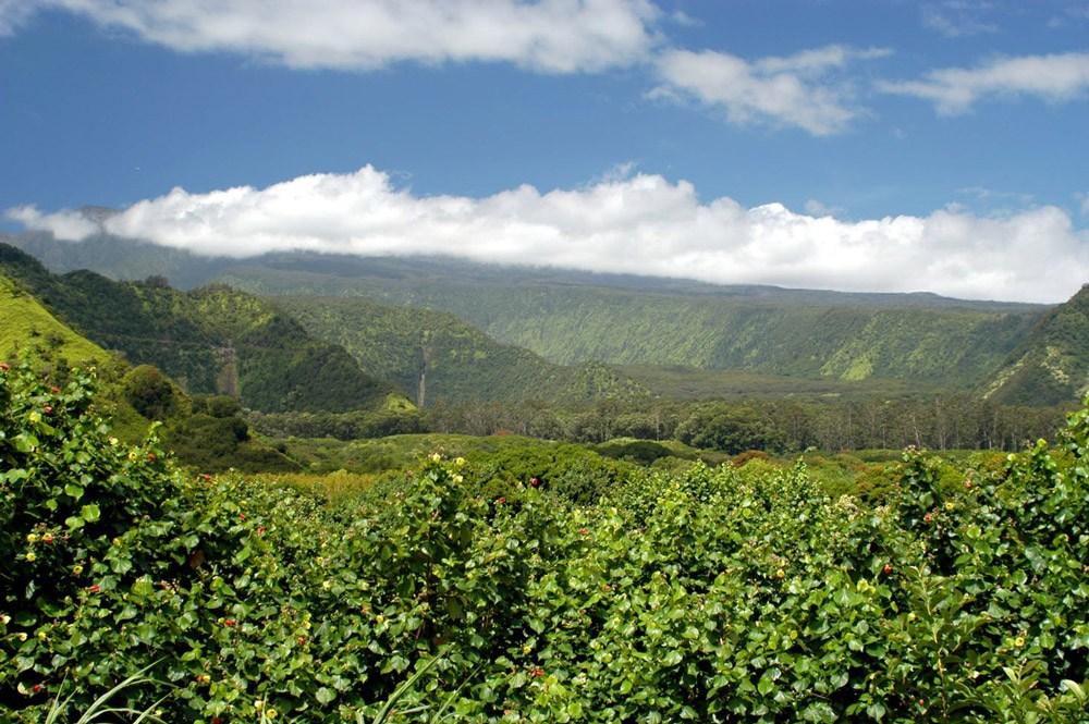 Road to Hana Haleakala Hike