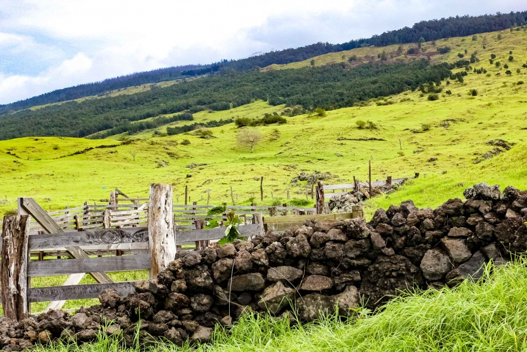 Old stone walls mark the boundry of a Keokea ranch