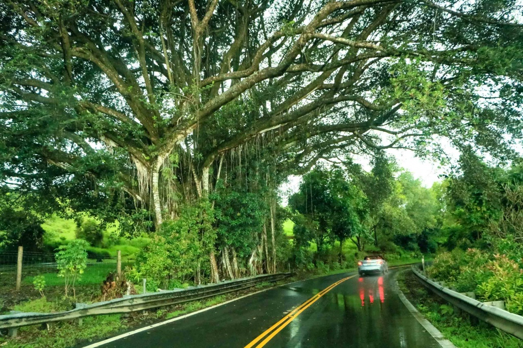 driving through the rainforests of Hana Highway